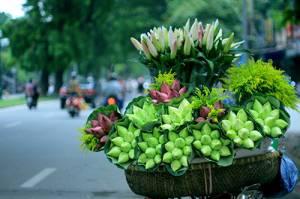 Nhớ Hà Nội, nhớ những mùa hoa