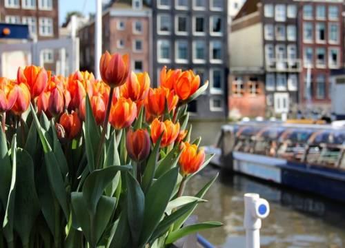 Vé máy bay đi Amsterdam (Hà Lan) giá rẻ